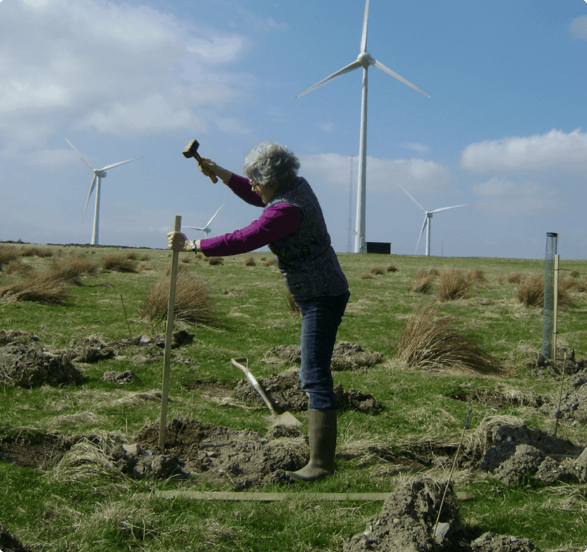 Woman hammering a tree support in front of windmills.